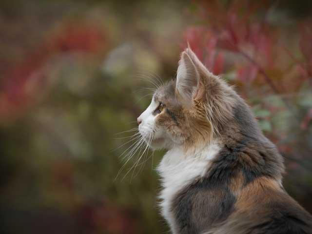 猫と新型コロナウイルスについて