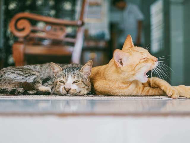 猫の見守りに。ペットカメラ 2020年おススメ6選