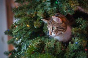 時事猫ニュース【2020/12/21クリスマス編】