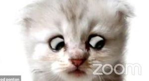 Zoomで猫フィルターを外せなくなった弁護士、裁判で大真面目の釈明