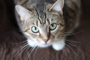 猫の秘めた能力「思い出忘れない?」、「物理法則を知っている!」…進む研究