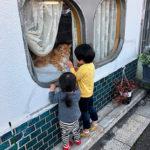 近所の美容室に高貴な猫が二匹いる