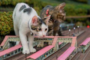 ジオラマを闊歩する保護猫親子に衝撃 コロナで経営危機の食堂も救う