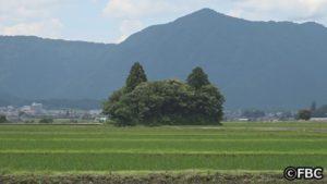 福井県大野市にねこ耳の森が出現