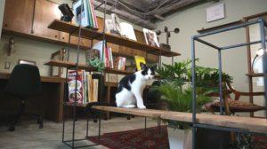 飼い猫を連れてきて、一緒に働けるシェアオフィス誕生